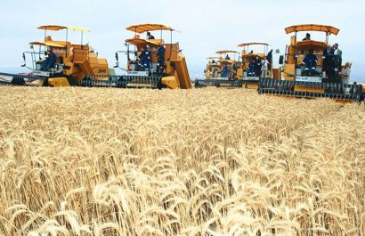 Bouira: La production céréalière atteint 2 millions de quintaux