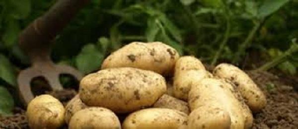 Bon à savoir: Savoir cuisiner la pomme de terre