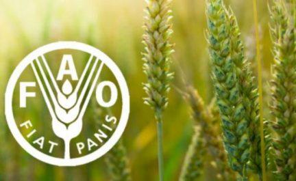 FAO : Le commerce international «essentiel» pour nourrir la planète