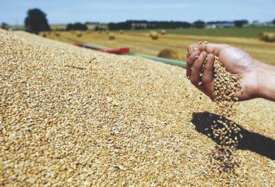 Céréales : l'Algérie dispose d'un stock de 35 millions de quintaux