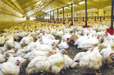 Aviculture : Surproduction et perturbation du marché !