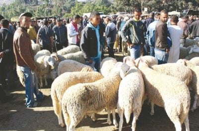 El-Bayadh : Un faux vétérinaire arrêté
