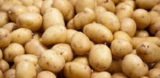 Vidéo: La saison de récolte de la pomme de terre a débuté dans la wilaya de Mila