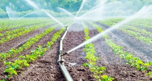 Irrigation des champs agricoles: Beaucoup reste à faire