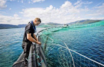 Projet d'appui à la stratégie nationale de la pêche et de l'aquaculture: Les recommandations des experts