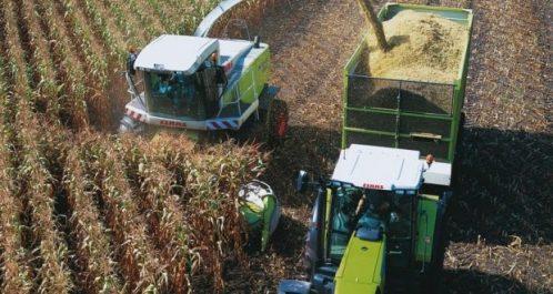 Maïsiculture : Perspectives prometteuses dans la wilaya d'Adrar
