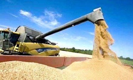 Marché européen des céréales : Un appel d'offres algérien fait augmenter les prix