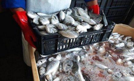 Trois quintaux de poisson avarié saisis