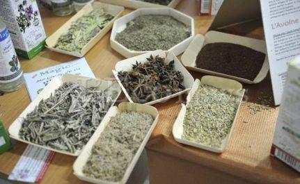 Tlemcen: Des pépinières expérimentales pour les plantes médicinales