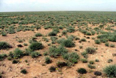 Le programme d'urgence de lutte contre la désertification contribuera à la préservation des pâturages et des steppes