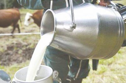 Programme de bourses américain «Cochran»: Les éleveurs de vaches laitières à l'épreuve