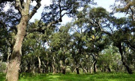 Recenser des espaces forestiers pour leur exploitation dans le domaine agricole