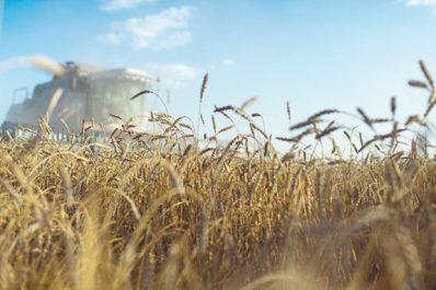 La Russie expédie un lot de blé «d'essai» vers l'Algérie