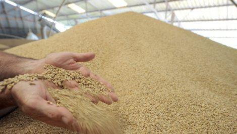L'Algérie a importé 4,6 millions de tonnes de blé tendre depuis la France durant la saison 2018/2019