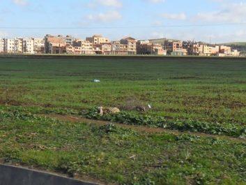 Des terres attribuées illégalement à des hommes d'affaires à Blida !