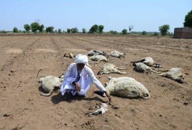Inde : des effets pernicieux de la sécheresse sur les comportements des animaux et des humains