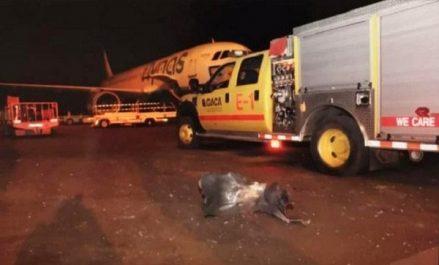 L'Algérie condamne l'attaque ayant ciblé l'aéroport d'Abha en Arabie Saoudite