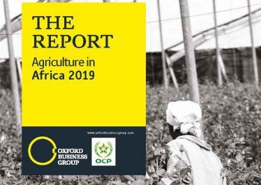 Afrique : « un immense potentiel agricole à exploiter »