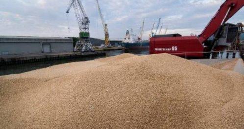 L'Algérie pourra se passer de l'importation d'orge et de blé grâce à la récolte céréalière de la saison 2018-2019