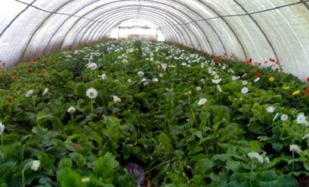 Lancement d'un programme de jumelage algéro-européen pour le renforcement de la qualité des produits végétaux